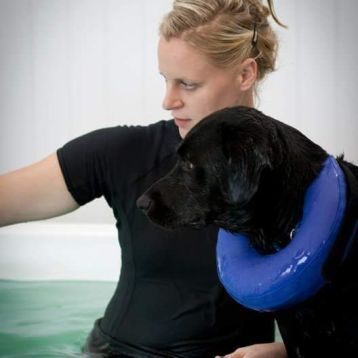 We have many different buoyancy aids to assist your dog in the pool.