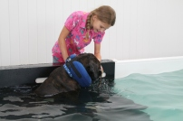 We can't emphasis enough how productive it is for you to be involved in your dog's hydrotherapy sessions. It can be reassuring for your dog and for you too.
